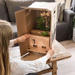 Kamerplant verzenden - kolibri company in doos (2)
