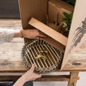 Kamerplant verzenden - kolibri company in doos (3)