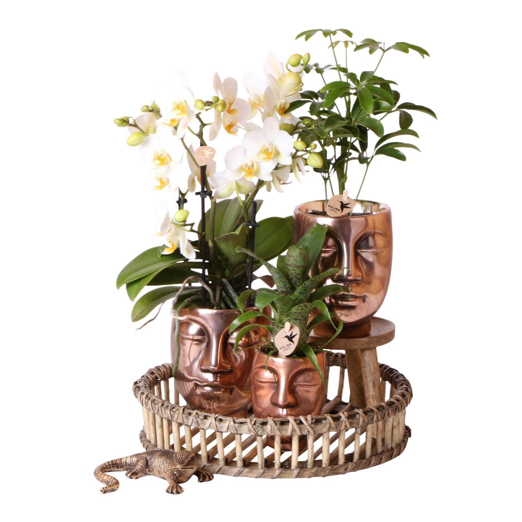Kolibri Company - Complete planten set Gift set face-2-face bronze