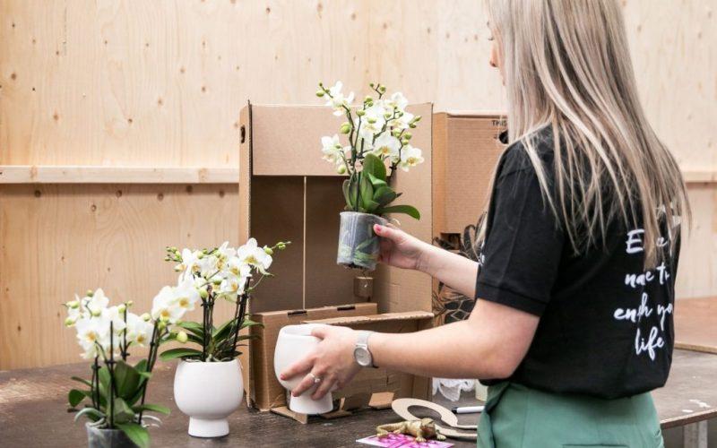 Kolibri company - verzenden van een kamerplant