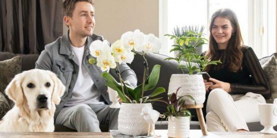kamerplanten die niet giftig zijn voor honden of katten